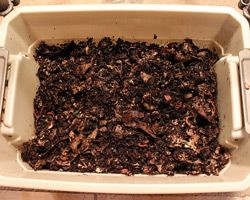 14 reasons to have compost worms