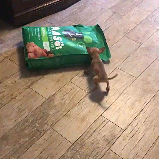 Mom, I'm hungry 