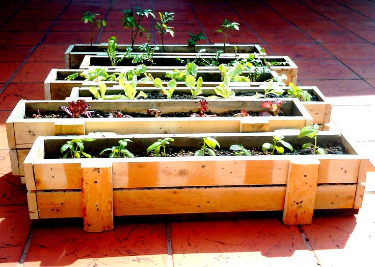 "Recycled pallet planter box (check that pallets are labelled ""HT"" heat treated NOT ""MB"" for chemicals and not old. Otherwise you'll run the risk of exposure to harmful chemicals, fungi and listeria!)"