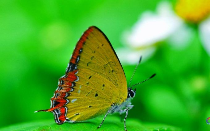 Full Hd Nature Wallpapers 1080p Desktop Butterfly With Images