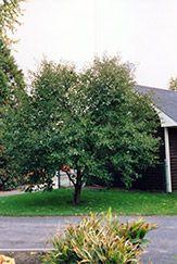 e43372c4bfe5d050d1b7bc388e17a938 - Gardener's Supply Williston Garden Center