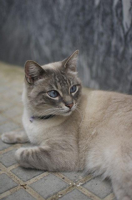 1000+ images about Rare Cat Breeds on Pinterest   Savannah ...