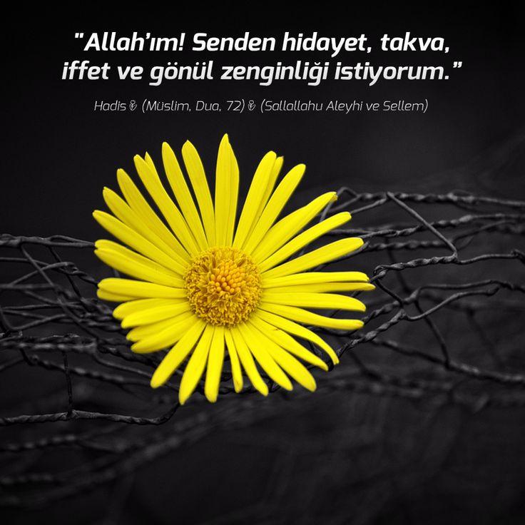 """""""Allah'ım! Senden hidayet, takva, iffet ve gönül zenginliği istiyorum."""" #Hadis (Müslim, #Dua, 72) (Sallallahu Aleyhi ve Sellem)"""
