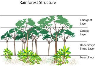 Rainforest layers, the rainforest layers - Funny Pictures