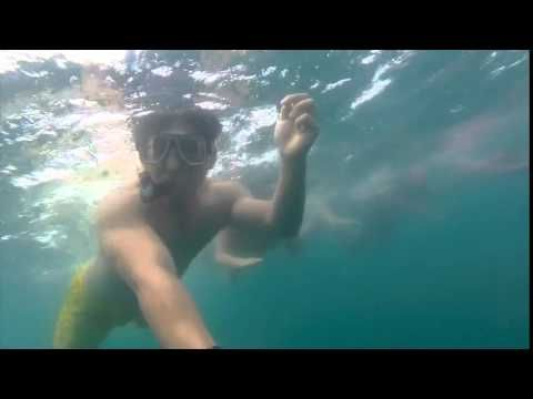 Whale Shark Diving Donsol, Philippines