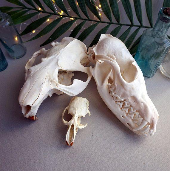 Set Of Skulls 3 Pcs Beaver Skull Fox Skull Muskrat Skull Skull Fox Skull Wedding Sneaker