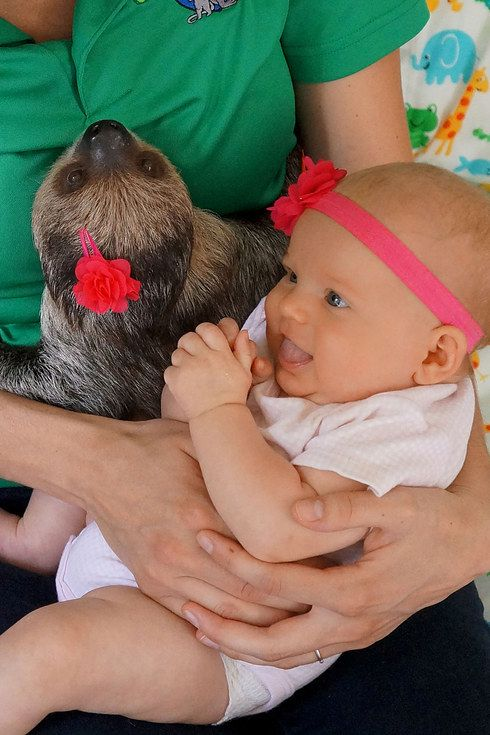 Best Sloths Images On Pinterest Sloths Baby Sloth And Help Me - 5 month old baby and sloth are the most unlikely of best friends