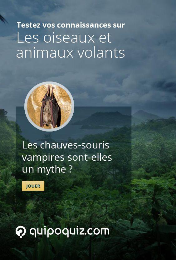 Testez vos connaissances sur les animaux volants avec ce Quipo Quiz.