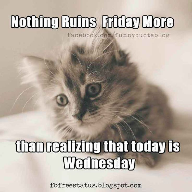 Nothing ruins Friday more than realizing that today is Wednesday, Happy Wednesday Meme.
