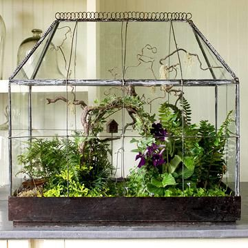 Miniature woodland.    An antique terrarium becomes a stage for a miniature woodland garden, arbor and all. Ours has flowering Cape primrose, rabbit's-foot fern, golden club moss, black and dwarf mondo grasses, variegated ivy, angel's tears and Kenilworth ivy.