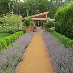 boxwood hedge image french garden - Google Search