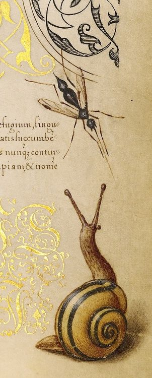 rosebiar:  Insects, Basil Thyme, and Land Snails (detail), Joris Hoefnagel, Georg Bocskay,