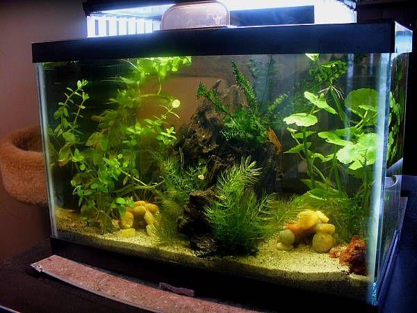 2 5 gallon crayfish tank aquarium life pinterest for Fish tank divider 5 gallon