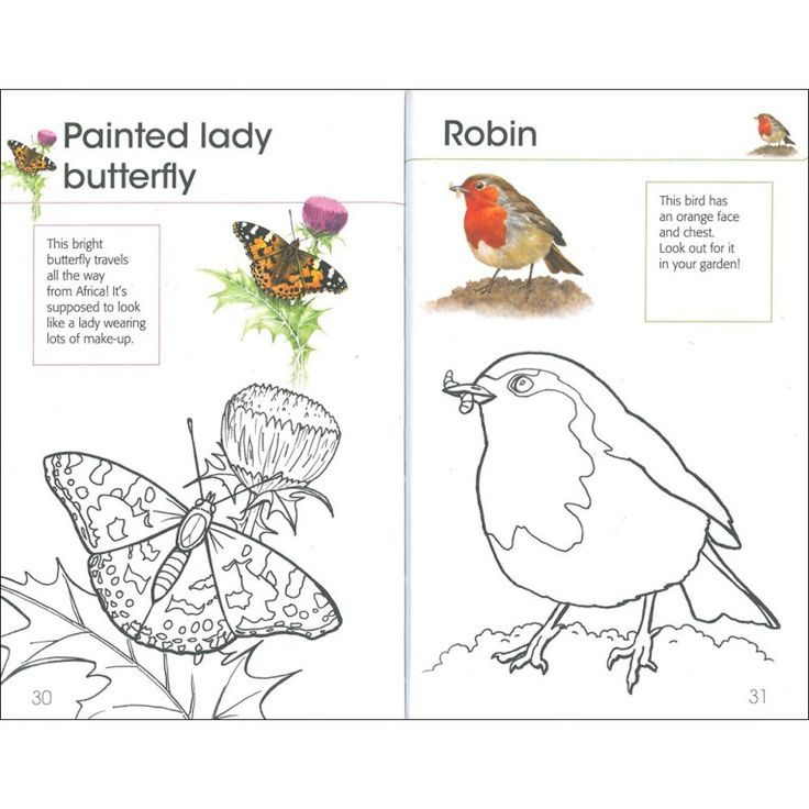bird coloring pages rspb shop - photo#1