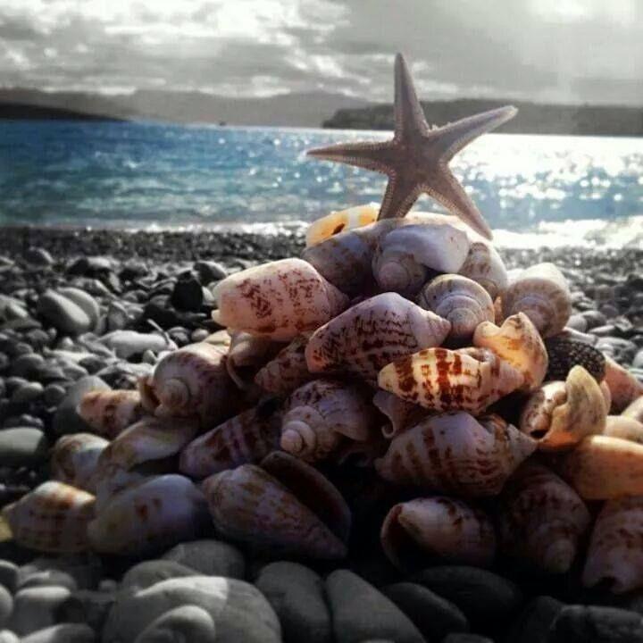 deniz kabukları ve deniz yıldızı