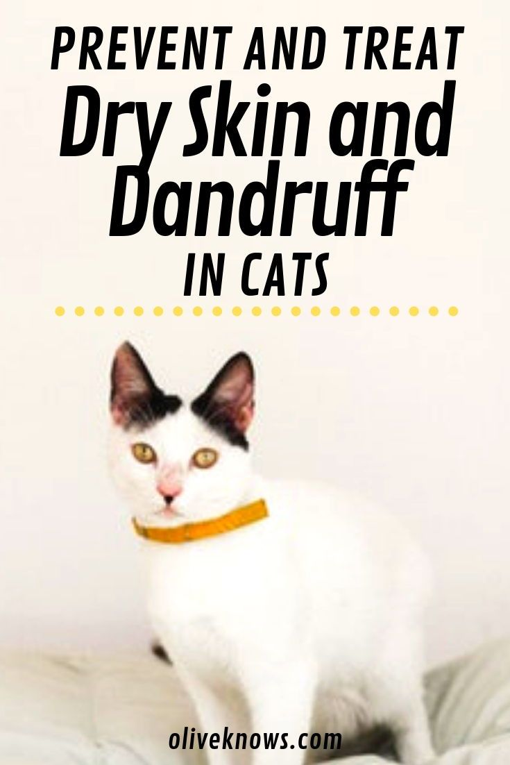 How To Prevent And Treat Your Cat S Dry Skin And Dandruff Cat Skin Dandruff Cat Health