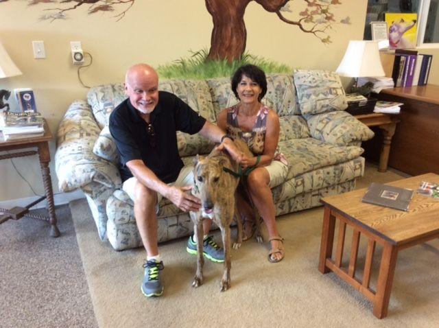 Tiger with his new family, Richard & Beverly.  Congratulations to this new #fureverfamily! #adoptaretiredracer #gpi #greyhound #greyhoundpetsinc #greyhoundsmakegreatpets