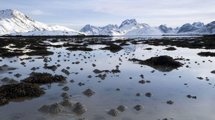 Der Wattwurm: Unermüdliches Umpflügen des Wattenmeeres-Meist sieht man nur die Ausscheidungen des Wattwurms, der an den Küsten der Nordsee im Verborgenen lebt: In seiner zwanzig bis dreißig Zentimeter tiefen, U-förmigen Wohnröhre macht er kaum etwas anderes als unaufhörlich zu fressen. Ähnlich wie Regenwürmer ernährt er sich von den Mikroorganismen und organischen Stoffen, die im sandigen Boden des Wattenmeeres enthalten sind. Der nicht verwertbare Sand wird etwa alle dreißig Minuten an der…