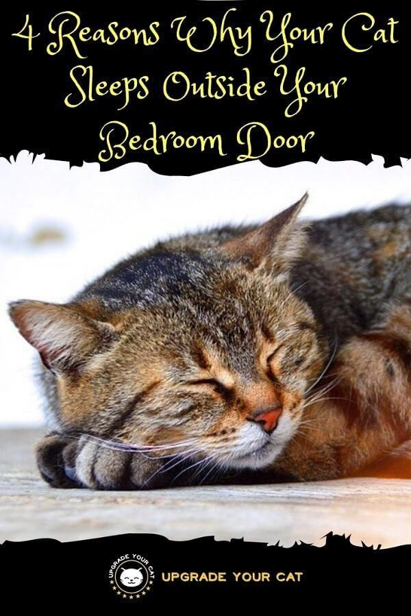 Why Does My Cat Sleep Outside My Bedroom Door It S A Good Thing Upgrade Your Cat Cat Sleeping Cat Bedroom Cats