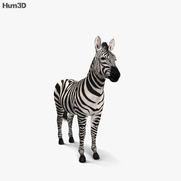 Zebra Hd Zebra Cinema 4d 3d Model