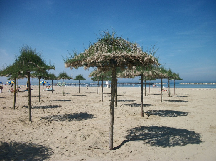 http://www.ellastudio.it/public/photos/Cesenatico_Bellavita_-_Spiaggia_vegetale_1.jpg