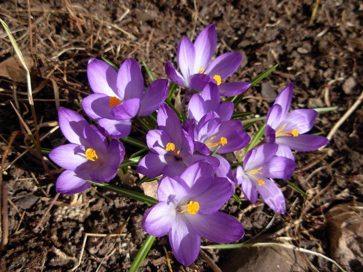 Kevään merkki.