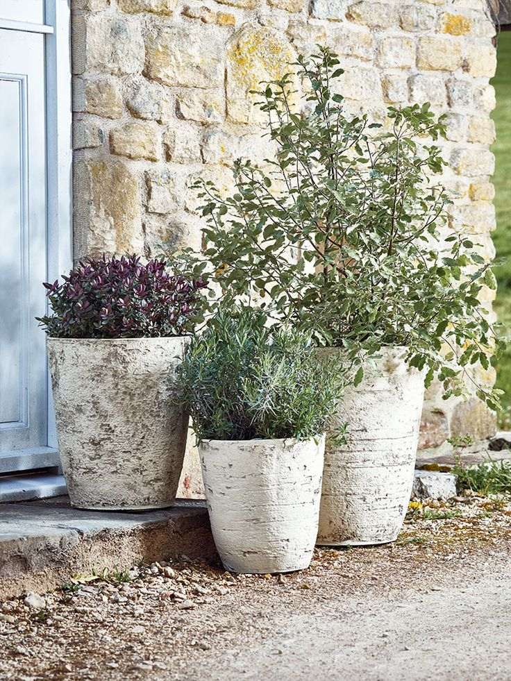 Add a touch of rustic charm to your doorstep with these birch effect planters from Cox & Cox