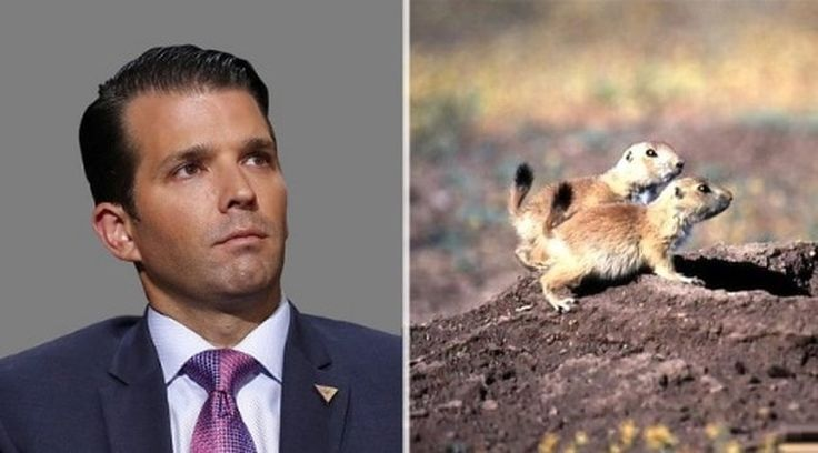 Trump Jr.'s prairie dog hunt in Montana prompts backlash