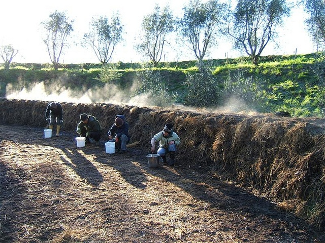 Compost piles steaming on a frosty morning by Seresin Estate, via Flickr