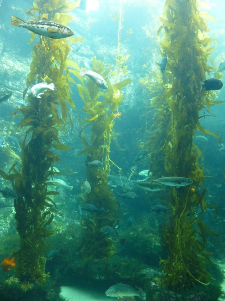 Underwater Ocean Plants