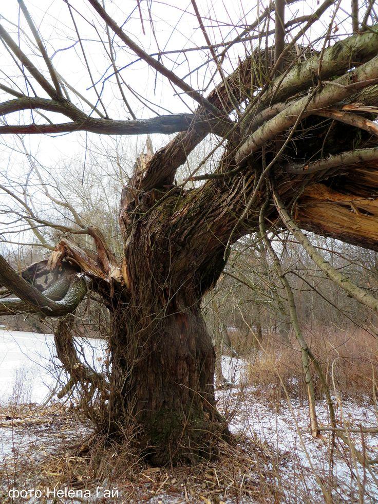 Что ни дерево — то леший,  Что ни пень — то лесовой. Ведьмой всхлипнула осина.  Корень выгнулся змеей...