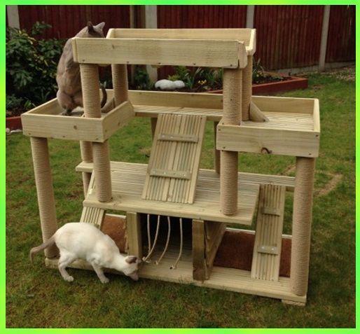 cat-climbing-towers.com                                                       …