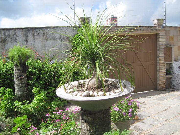 Las 25 mejores ideas sobre planta pata de elefante en for Jardines de poni