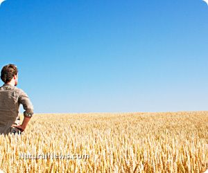 Australia to unleash genetically modified wheat - who will burn down these fields and stop this human rights horror?