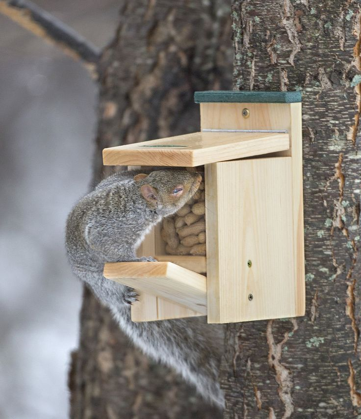 349 Best Images About Squirrel Houses Squirrel
