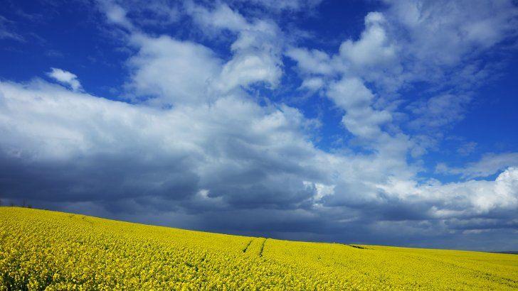 Campo Flores El Cielo Nublado Paisaje