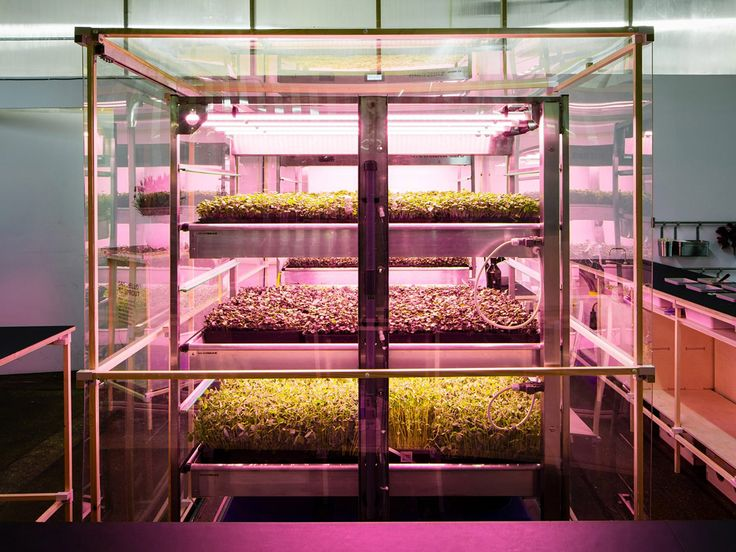 IKEAu0027s Innovation Lab Space10 Created A Pop Up Hydroponic Vertical Farm  During This Yearu0027s London