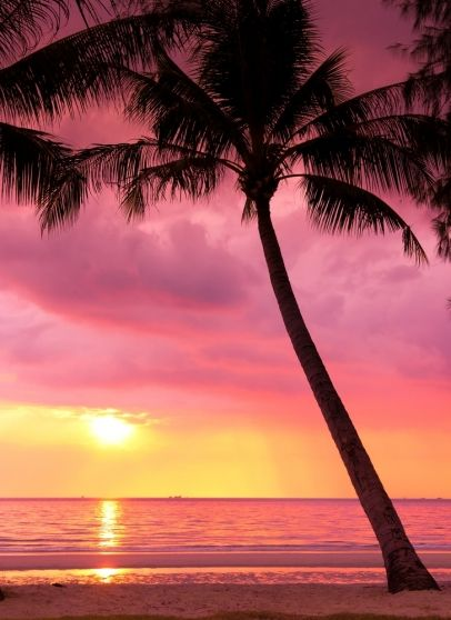 Beautiful Hawaii pink sky palm tree