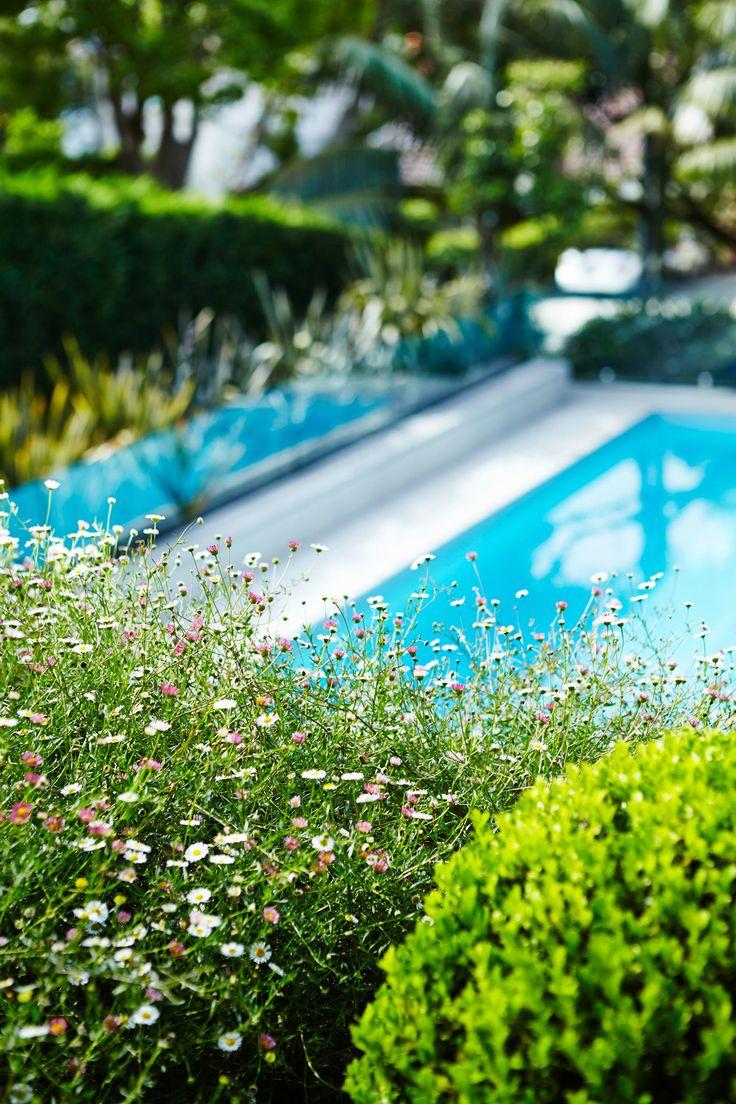 Poolside Planting - Outdoor Establishments