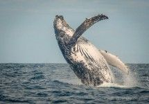 Ocean Odyssey - Whale Watching trips in Knysna, South Africa. http://bit.ly/29sGWVw #dirtyboots #whalewatching #whaletrips #knysna #southafrica #boattrips #gardenroute