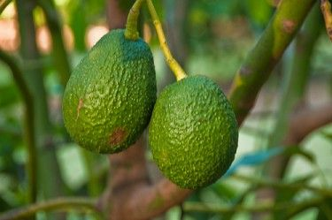 An Avocado Hair Treatment for Soft and Shiny Hair You Can Make at Home