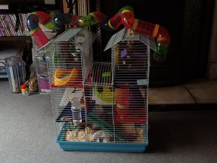 Hammy Hammelizabeth Heath's cage