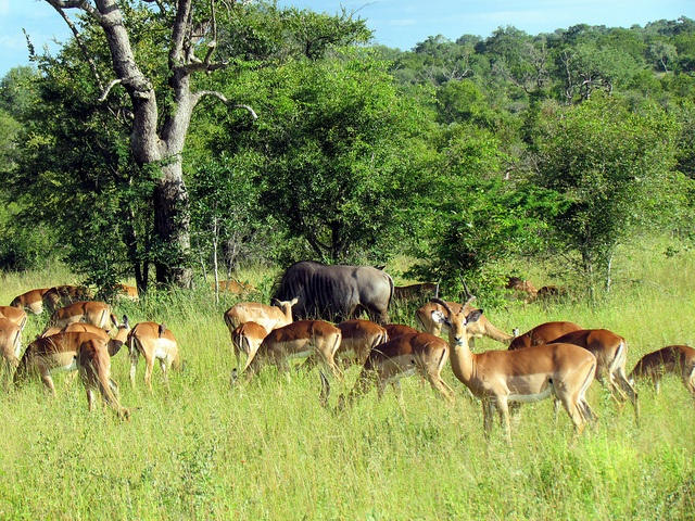 Top Safari Experiences in South Africa