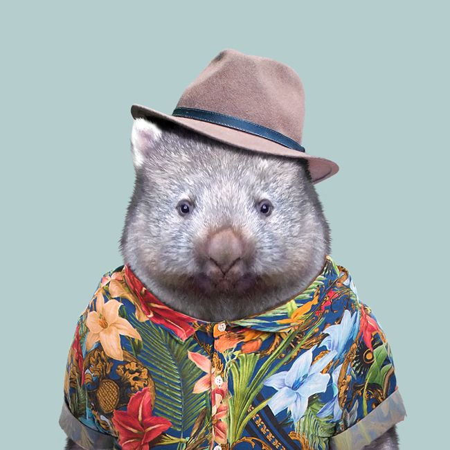 Doug the wombat is so hip that he likes to stay hidden in protected areas across Queensland. Don't worry though, some of his more outgoing relatives can be found at wildlife sanctuaries across the state.  #thisisqueensland