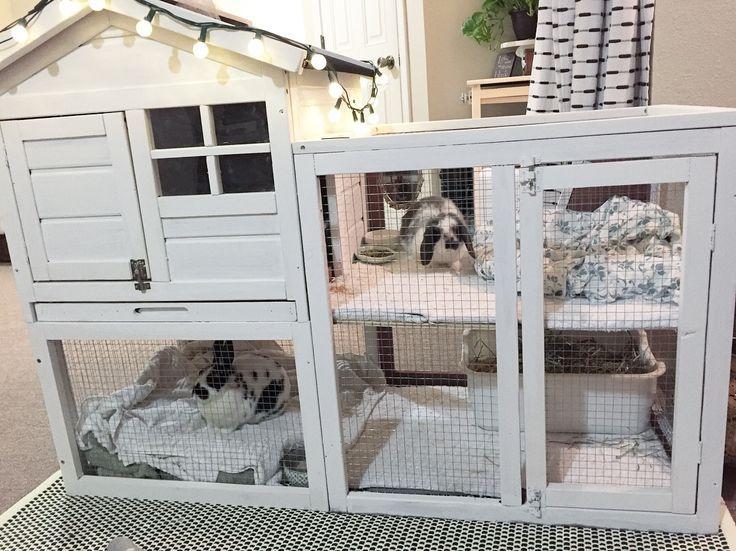 Weiße, auf zwei Ebenen aufgeteilte Hase für Kani…