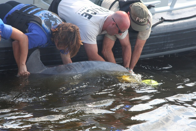 Entangled dolphin rescued in St. Johns River     It was a happy ending to a potentially deadly event.   Biologists and law enforcement personnel freed a dolphin that had become entangled in crab trap lines in the St. Johns River. #FWC: Cetacean Rescue, John Rivers, Rivers T-Shirt, Entangl Dolphins, Photo Galleries, Crabs Traps, Florida Rescue, Dolphins Rescue, Cetacean Entangl