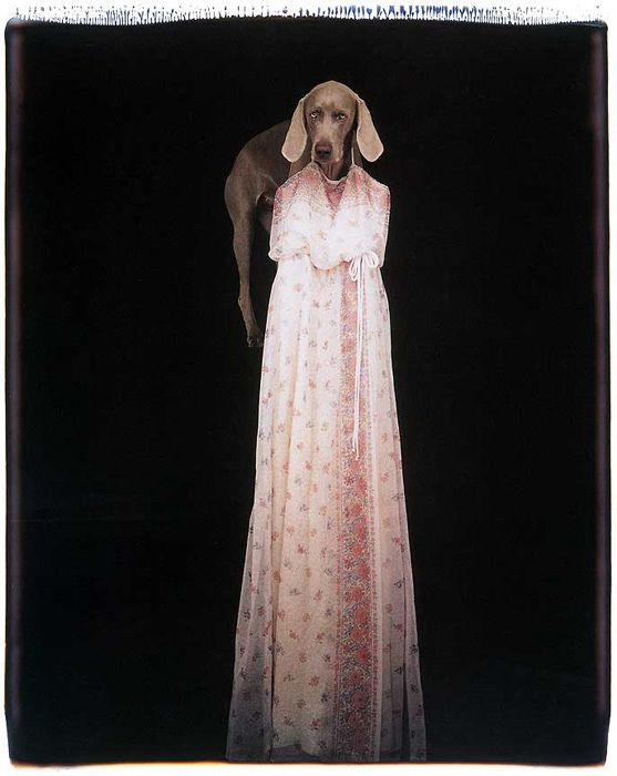 Le accattivanti foto di William Wegman.