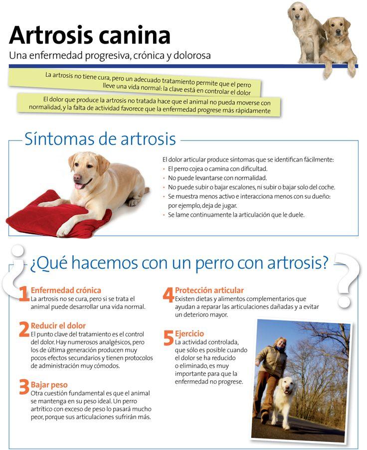 Resultado de imagen para artrosis en perros