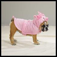 Hahaha!  Bulldog Halloween Costume