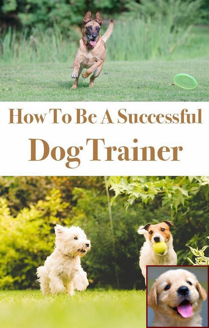 House Training A Bully Puppy And Dog Training Courses Tafe